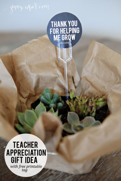 Succulent teacher appreciation gift with free printable thank you for helping me grow tag.